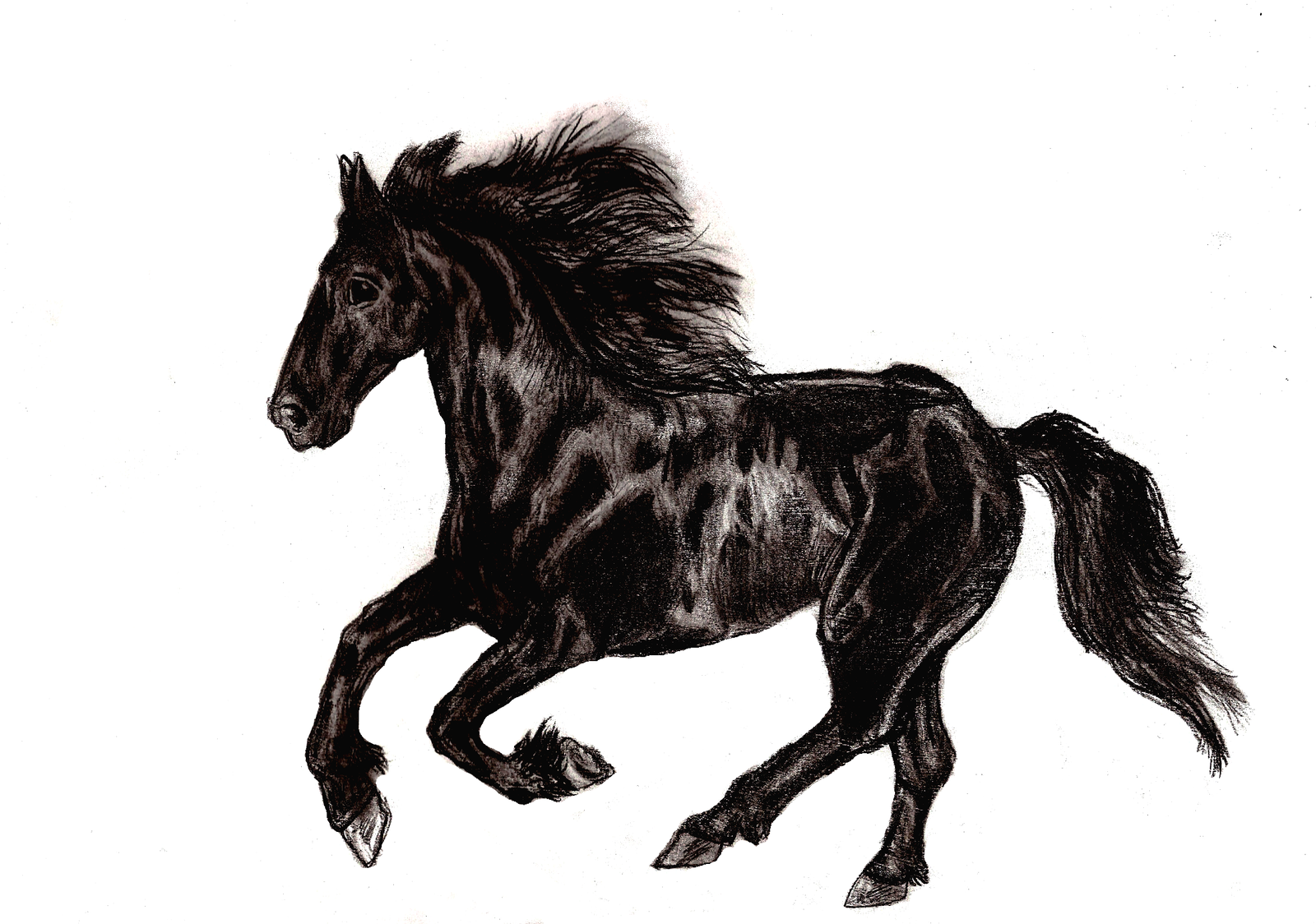 Black Horse Drawing