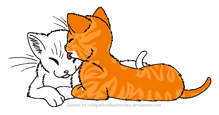 A Orange Female Cat Mates With An Black Male