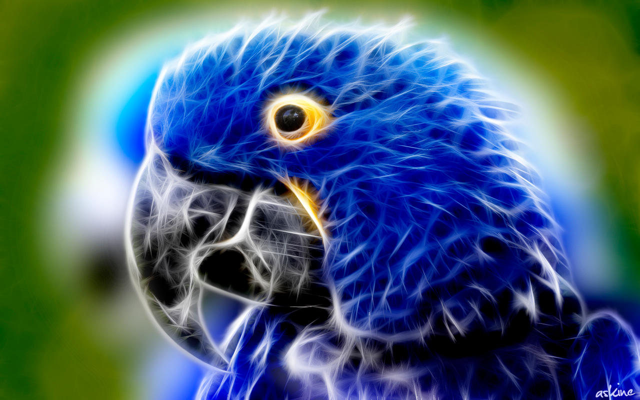 Blue Parrot - Fractal Wallpaper by askine