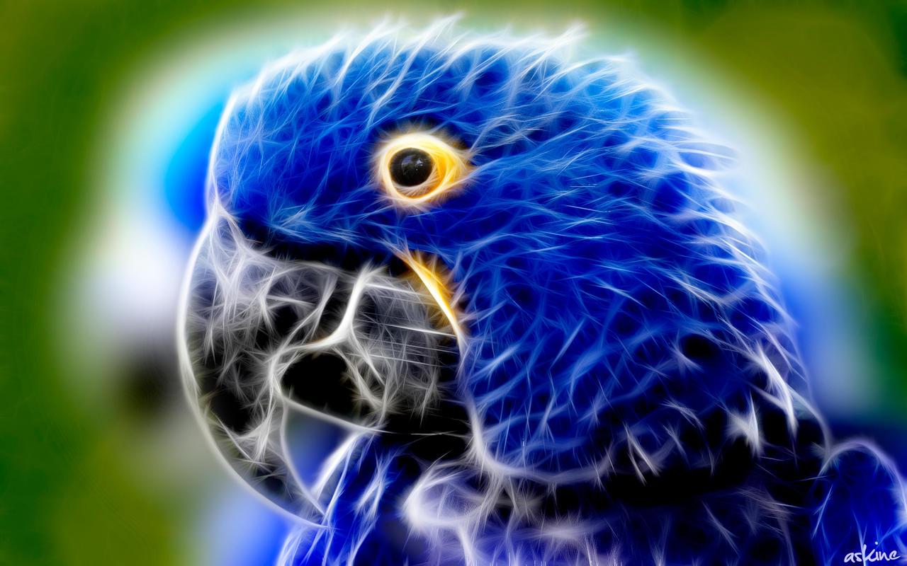 Blue Parrot - Fractal Wallpaper