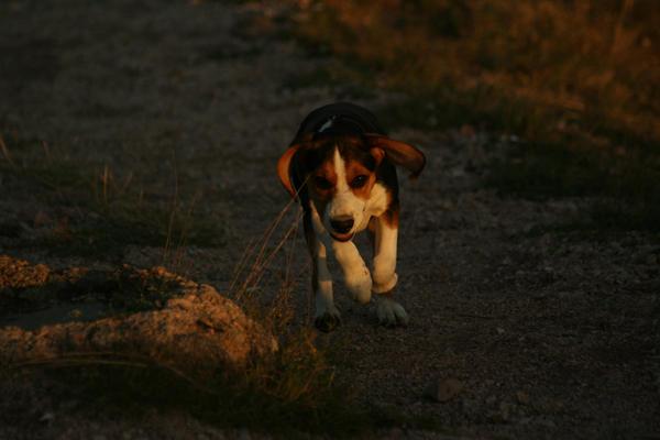 Dog by getupp