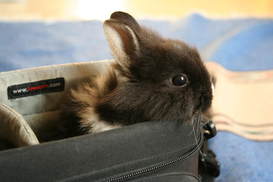 Bunny in the bag by getupp