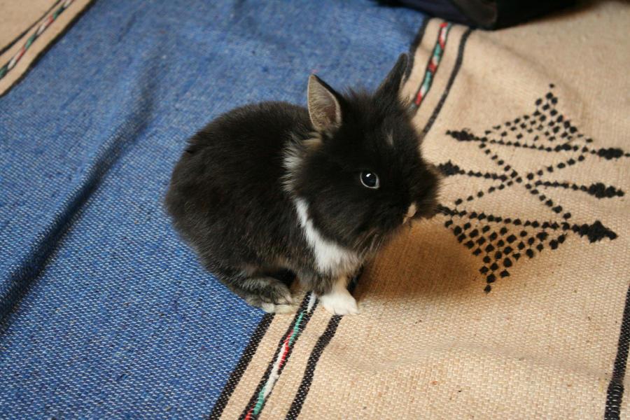 Bunny on the flo-or ... :D by getupp