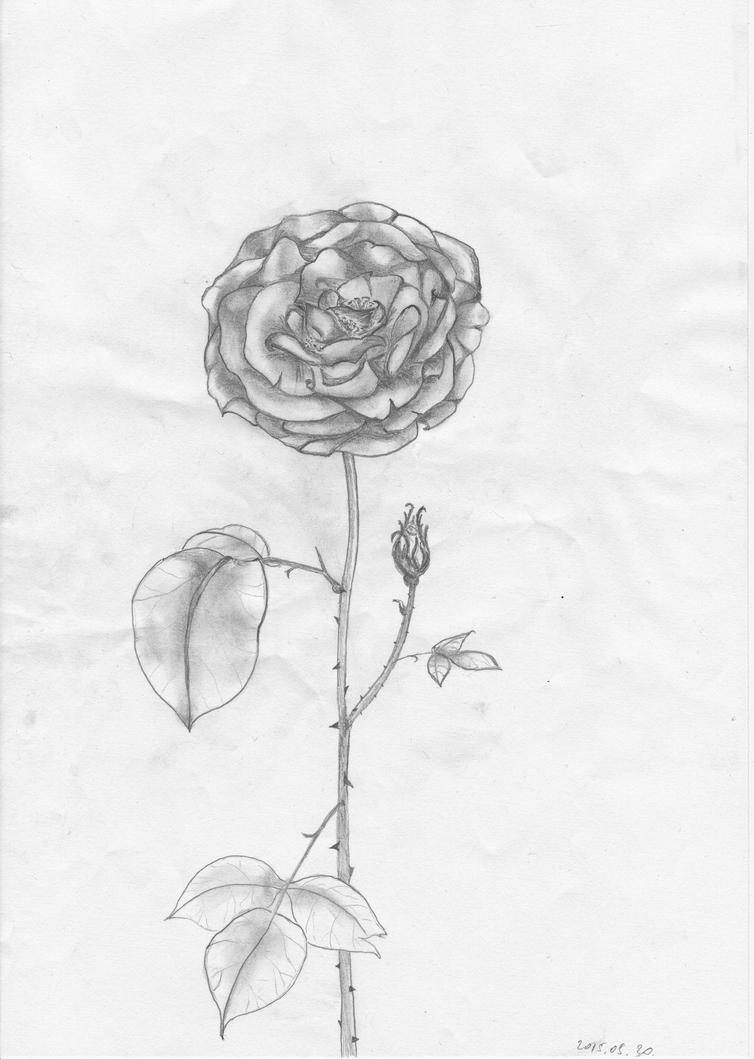 Queen of Flowers by getupp