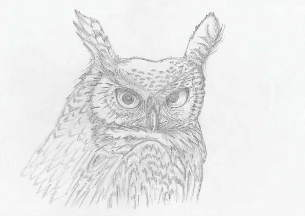 Owl by getupp
