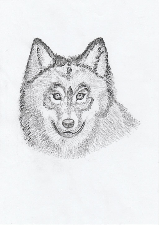 Wolf by getupp
