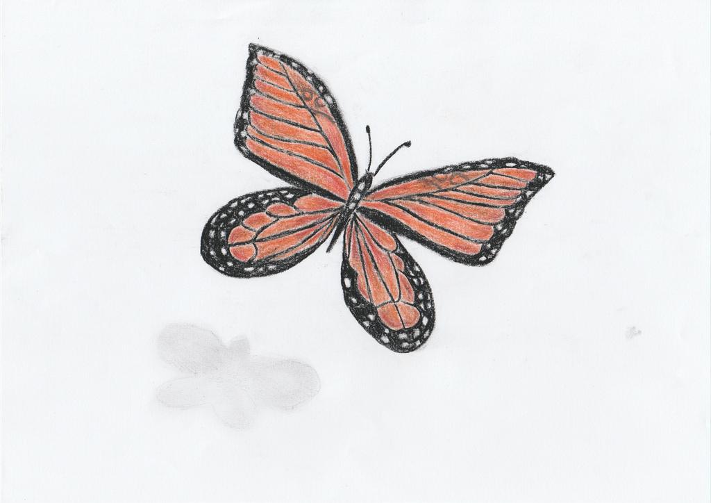 Monarch Butterfly by getupp