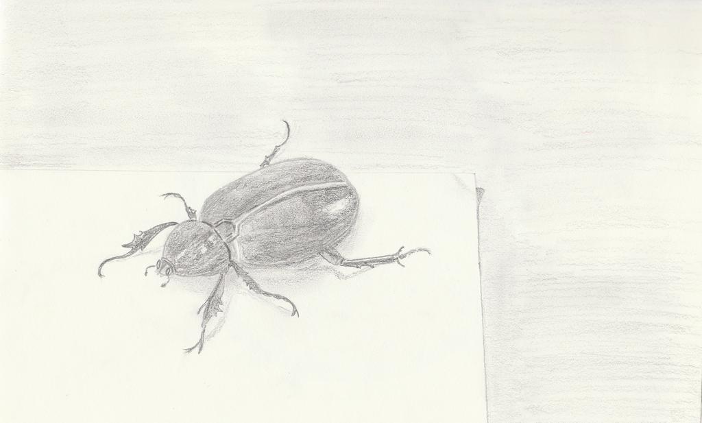 Beetle by getupp