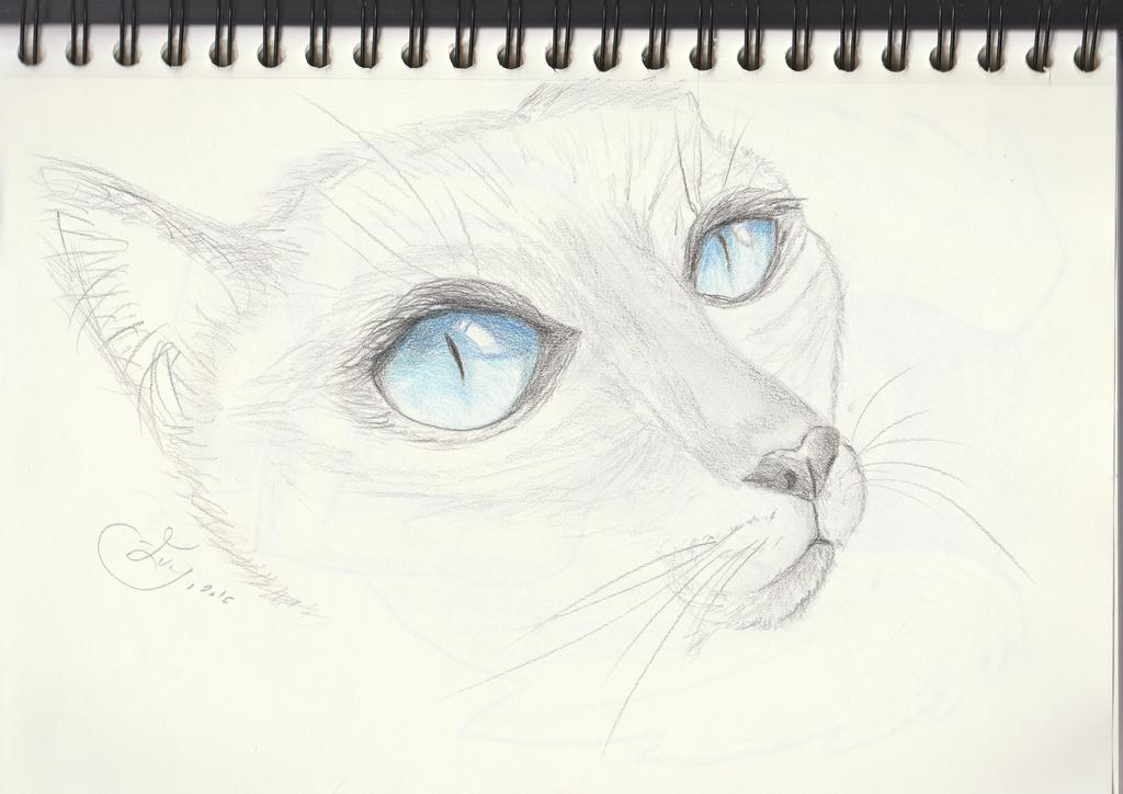 Sketch of siamese cat eye by getupp