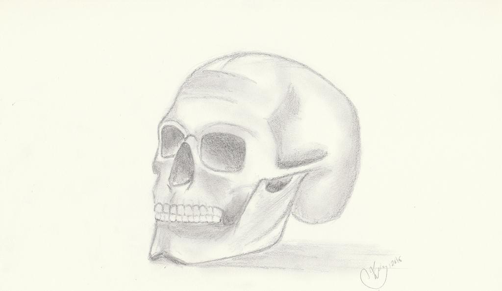 Sketch of a skull by getupp