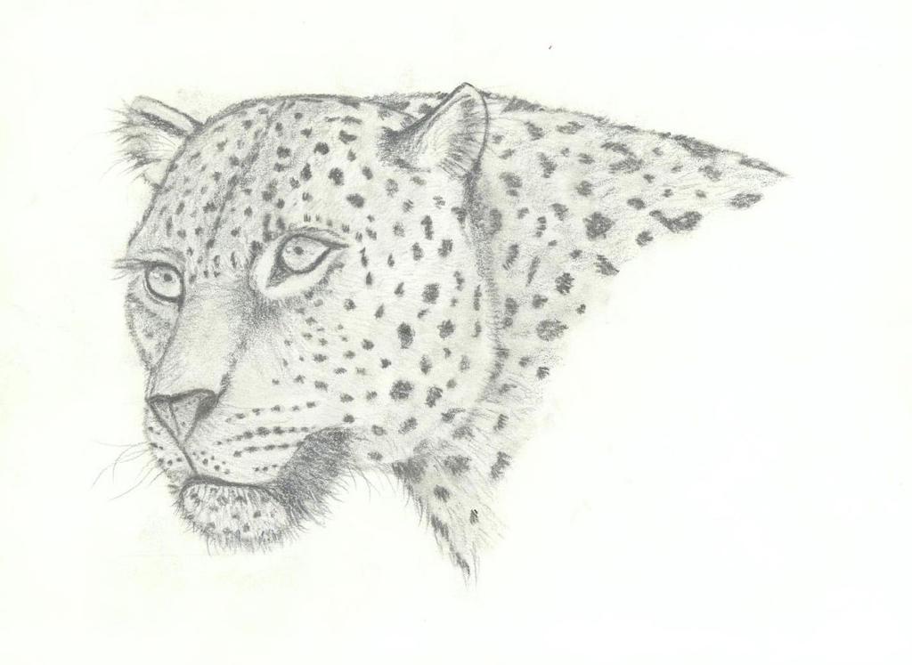 Leopard by getupp