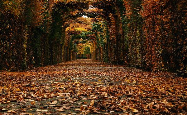 Autumn L2 by ancarosu