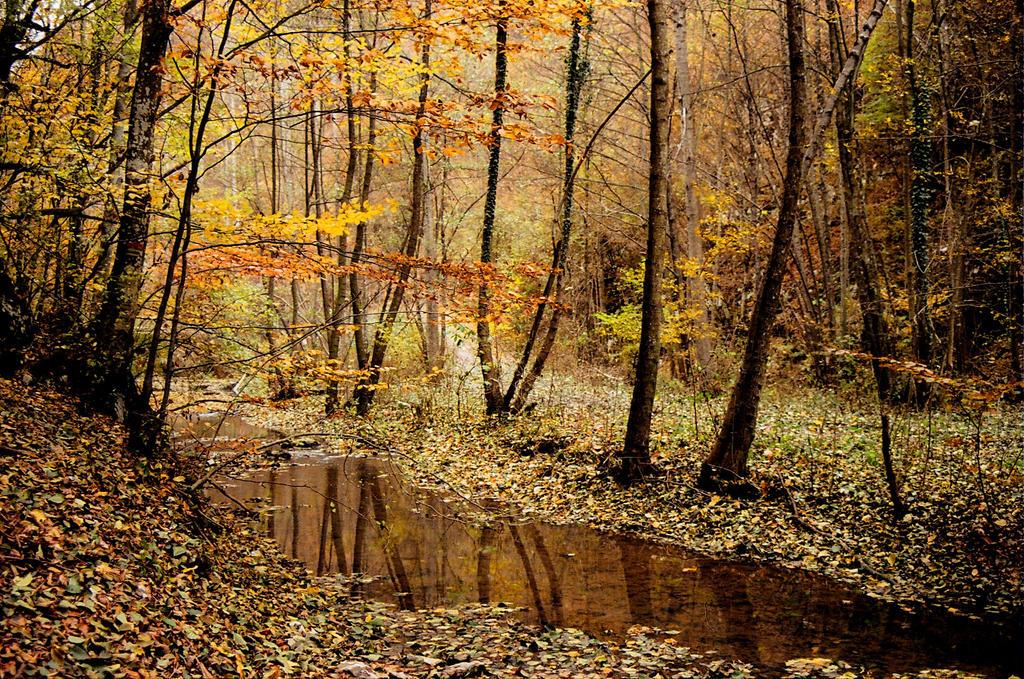 Hello autumn by ancarosu