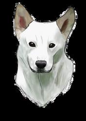 Canaan dog by AlexAislinn