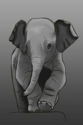 Baby Elephant by AlexAislinn