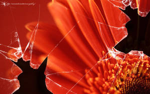 Broken vista red flower by CypherVisor