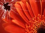 Broken vista red flower 2 by CypherVisor