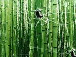 Broken vista bamboo trees by CypherVisor