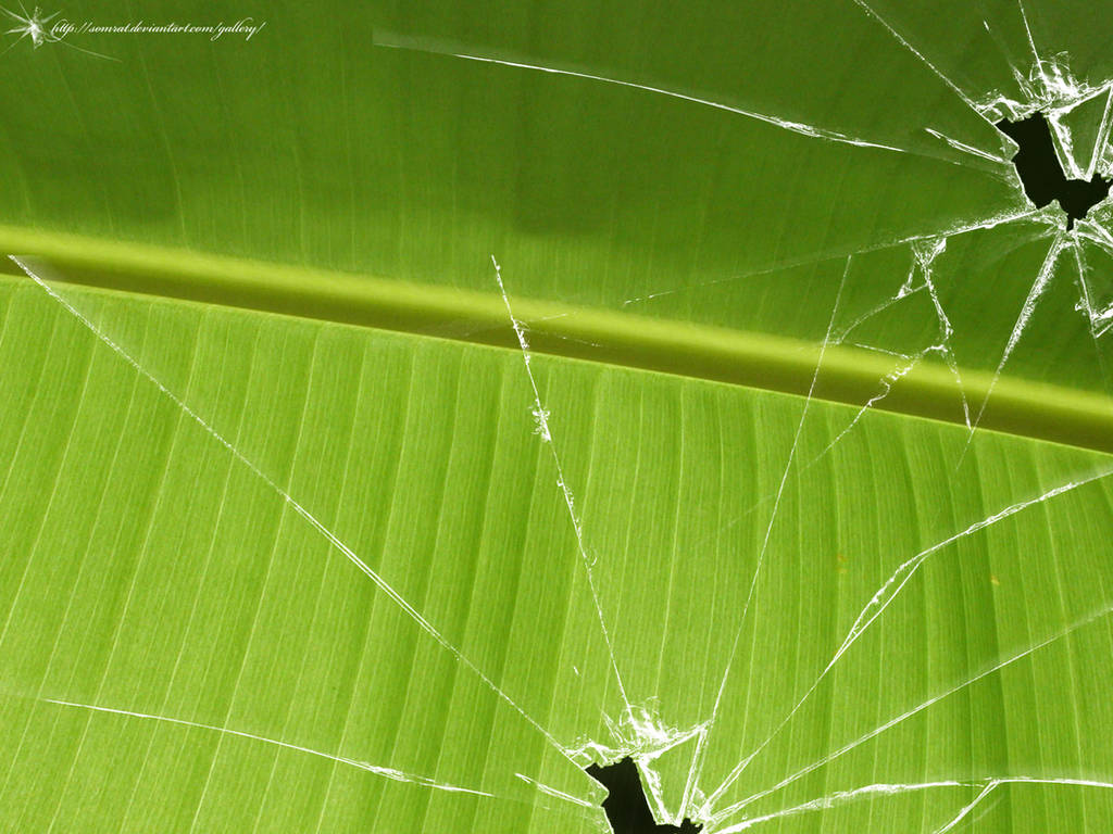 Broken vista banana leaf by CypherVisor