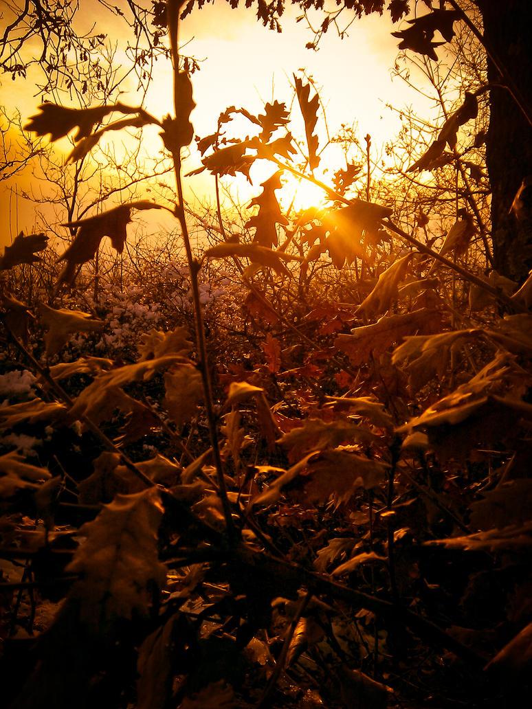 Autumn by zsuzsu12