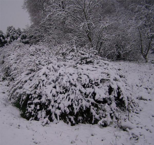 Pesant_de_neige by Nanashi-dono