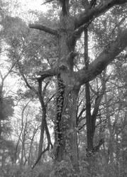 bw tree by SvartAlvor