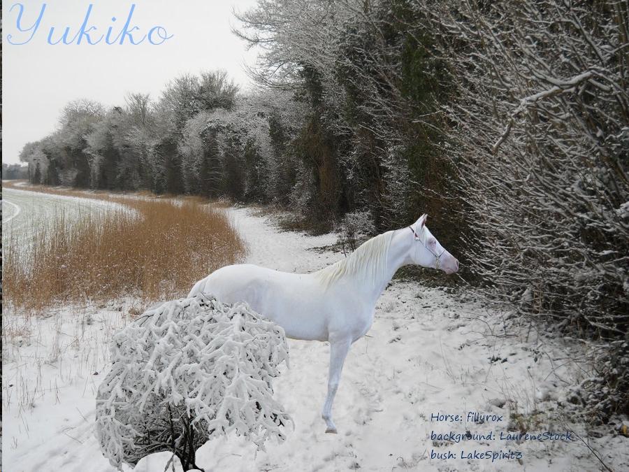 Yukiko - horse Yukiko_by_erosaf-d5wkpy0