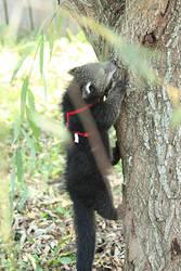 Little Bearcat by Ffex