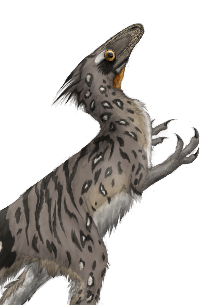 Sinocalliopteryx gigus