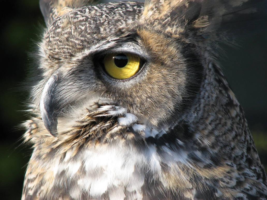 Intelligent Eyes