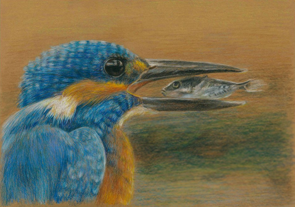 research paper on kingfisher crisis