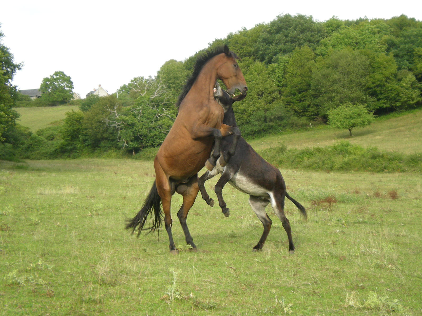 horse and donkey playing by pluvier croisette on deviantart