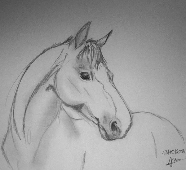 Horse head Sketch by Pluvier-Croisette
