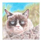 Grumpy Cat by thewholehorizon