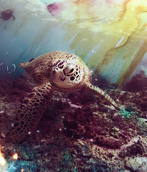 Gnarly Turtle