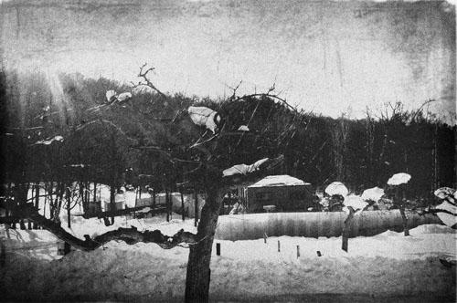 Winter by djoput