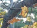 Early Fall I