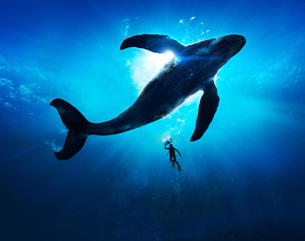 S8 Dolphin Wallpaper Hd Bestpicture1 Org