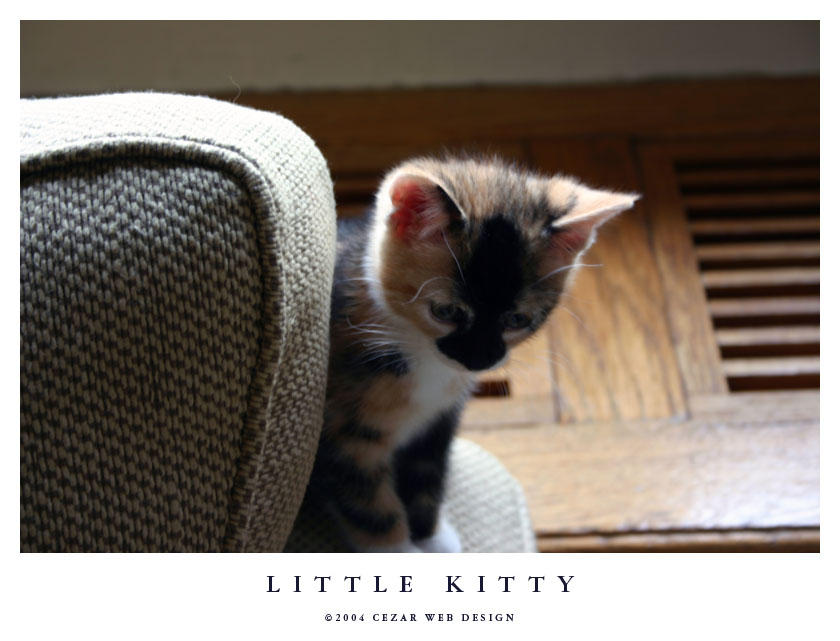 Little Kitty by cezars