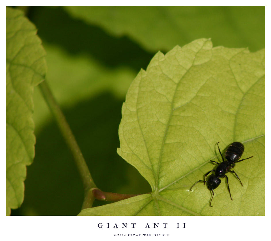 Giant Ant II by cezars