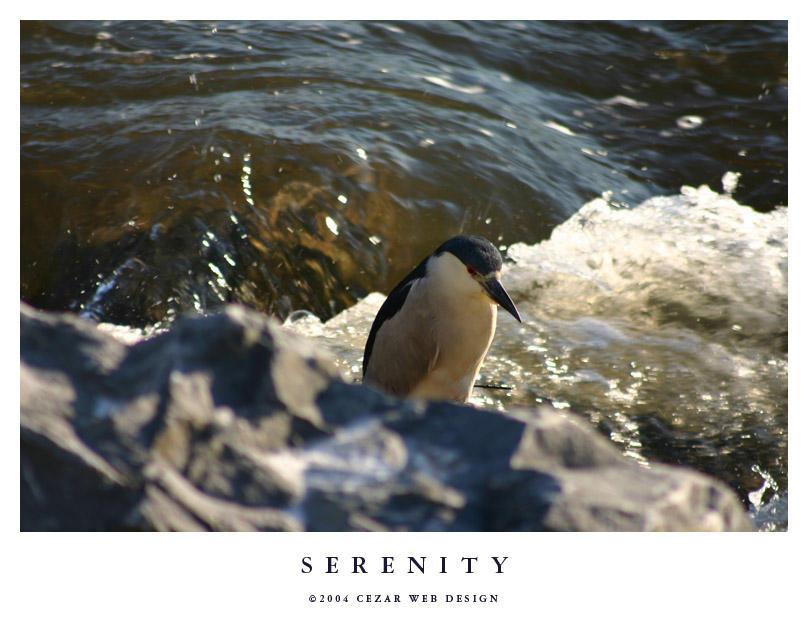 Serenity by cezars