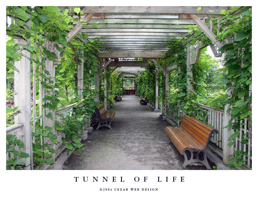 Tunnel of Life by cezars