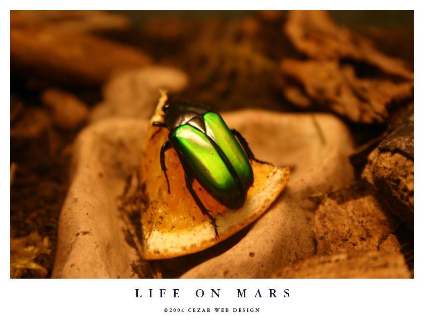 Life on Mars by cezars