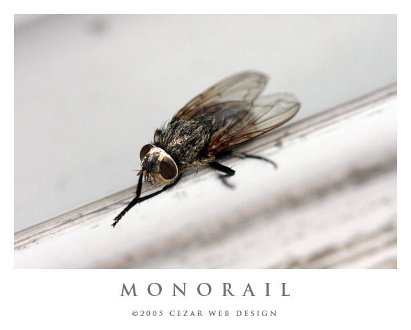 Monorail by cezars