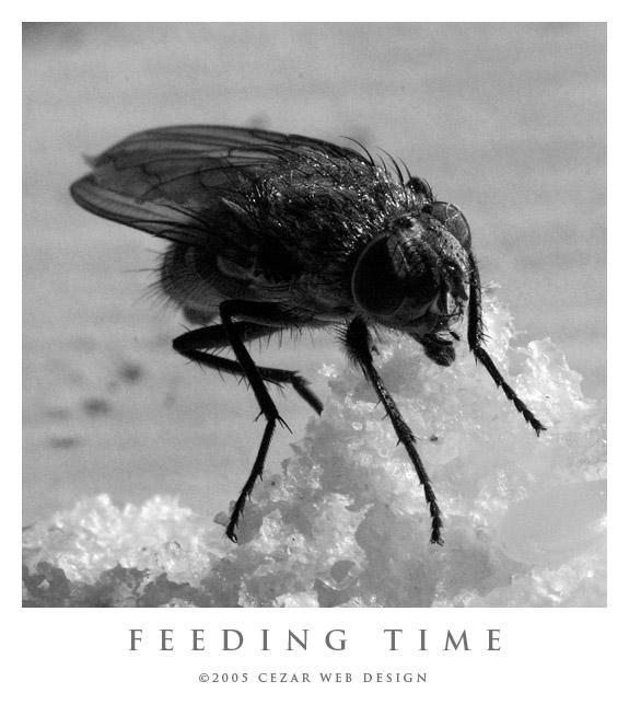 Feeding Time by cezars