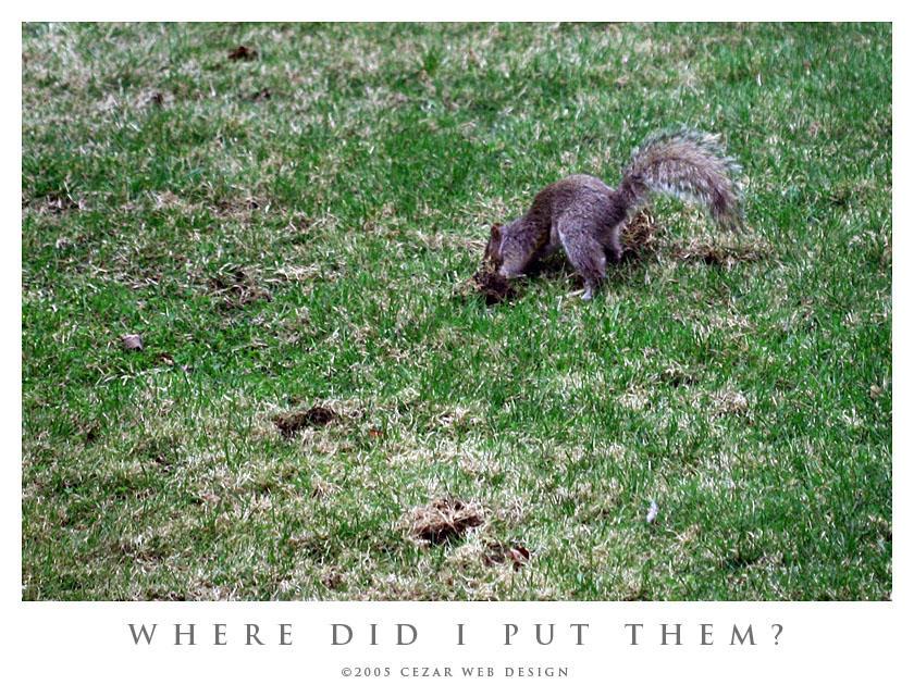 Where Did I Put Them ? by cezars