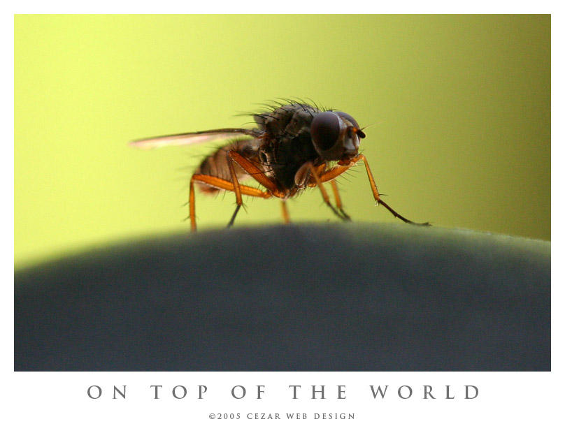 On Top of the World by cezars