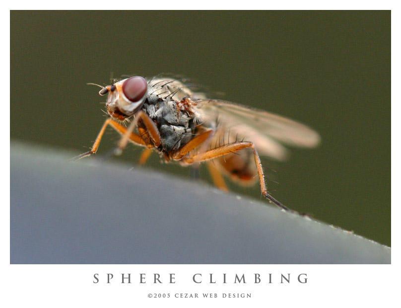 Sphere Climbing by cezars