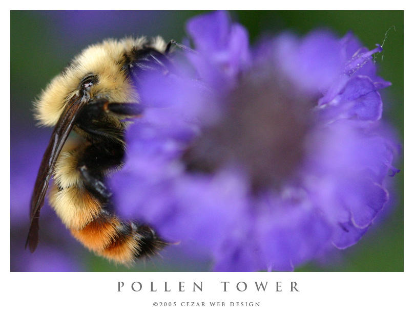 Pollen Tower by cezars