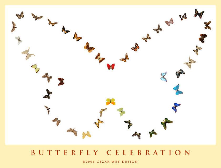 Butterfly celebration by cezars